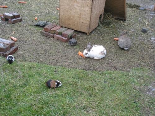 mehrere kaninchen zusammen halten